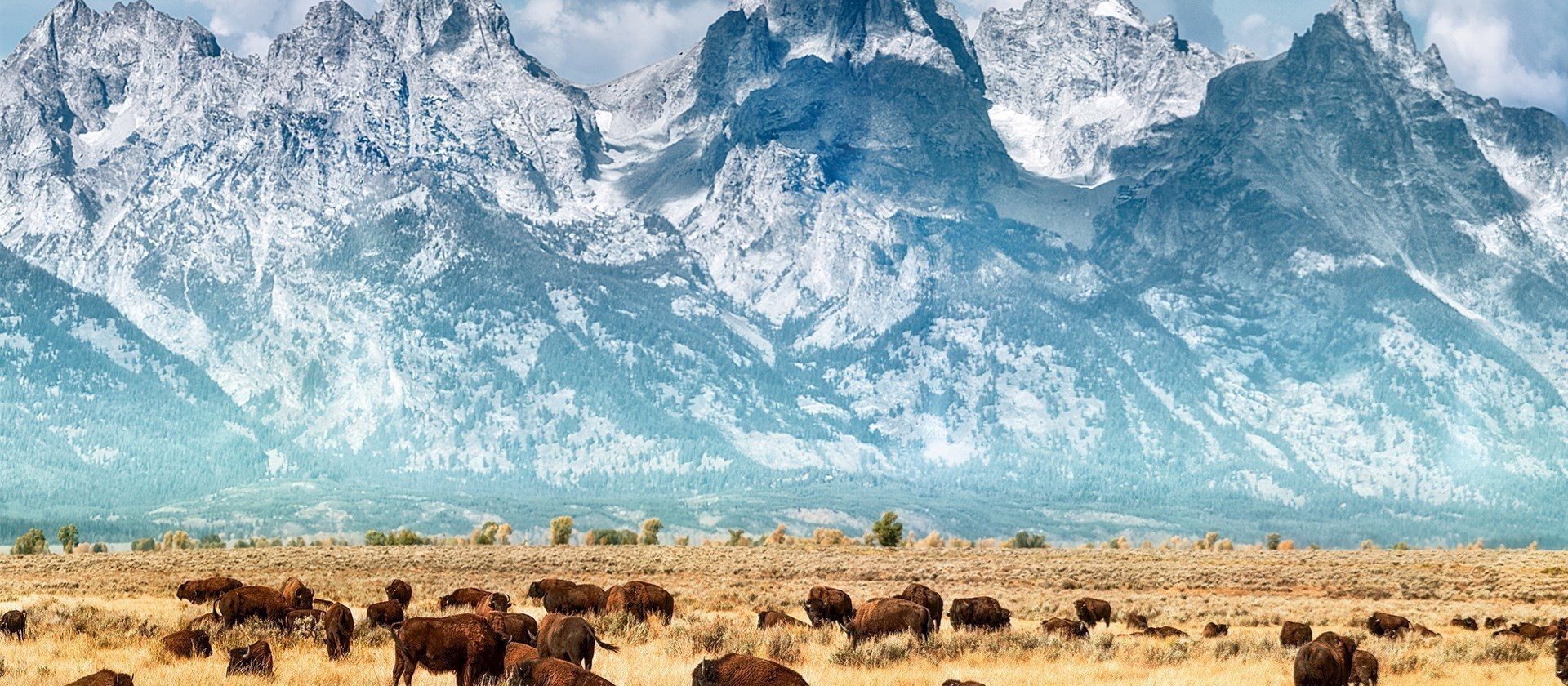Mountains and Buffalo - Yellowstone National Park